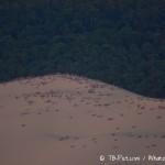 21h15 : De nombreux spectateurs au sommet de la Dune du Pila, les yeux et appareils photos fixés vers l'Ouest…
